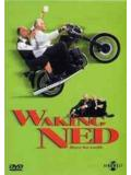 Waking Ned - Share the Wealth (DVD)